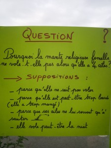 04-Question supposition