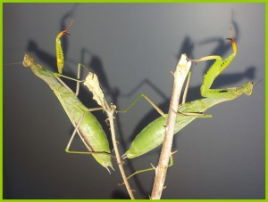 2 femelles (2)